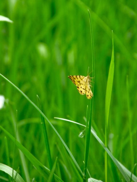 identification chenille + papillon 01.70