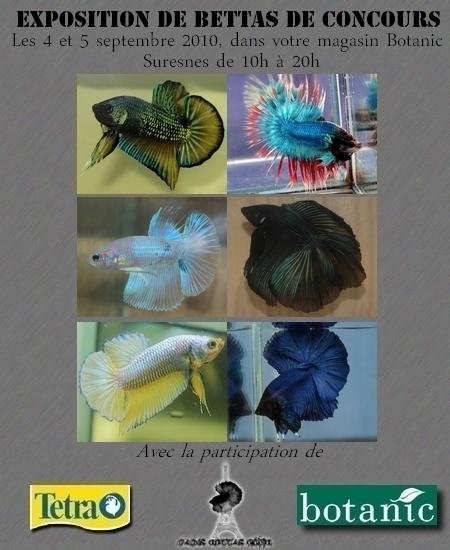 Exposition de Bettas de Concours, Suresnes, 4-5 sept. 2010 13.120