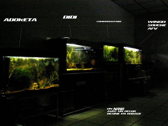 fishroom (fishappart) Derwins 15.268