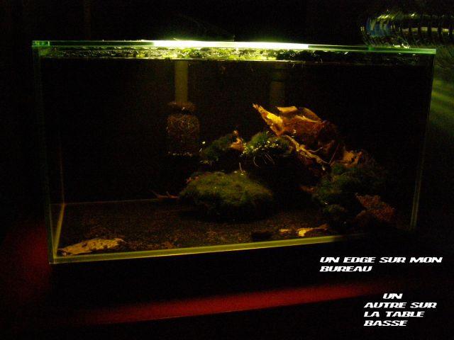 fishroom (fishappart) Derwins 15.272