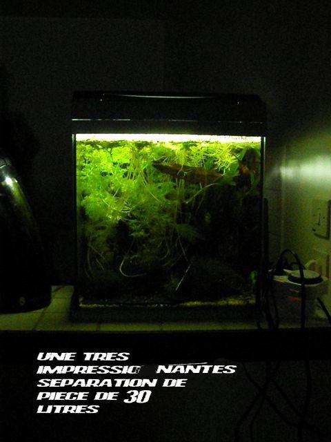 fishroom (fishappart) Derwins 15.274