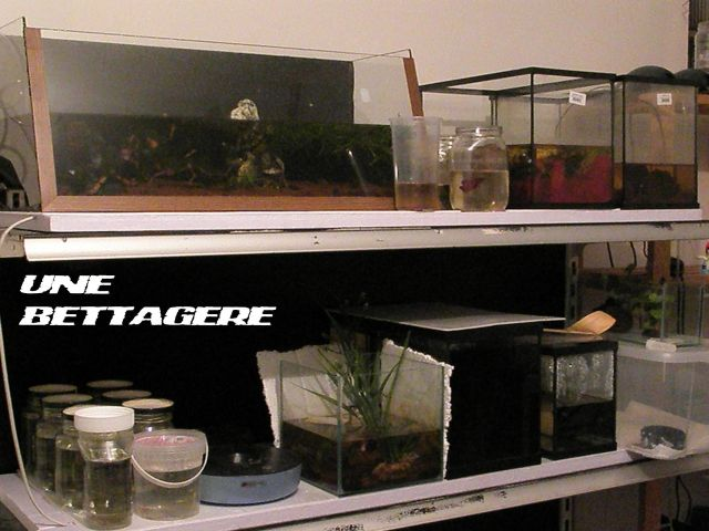 fishroom (fishappart) Derwins 15.275