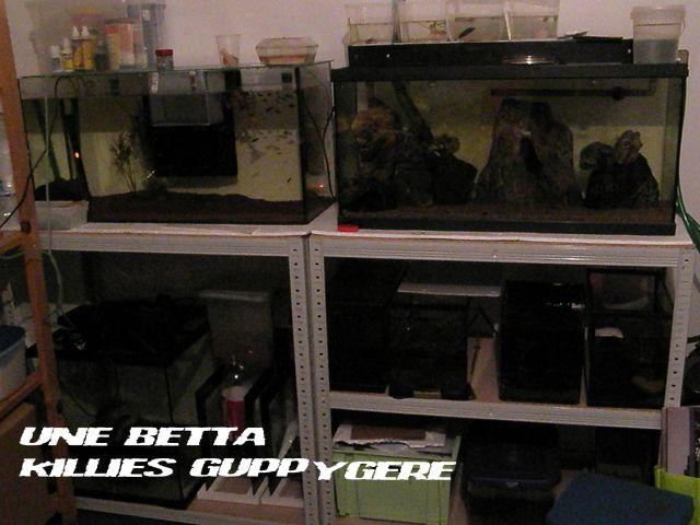 fishroom (fishappart) Derwins 15.276