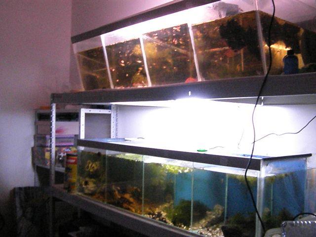 fishroom (fishappart) Derwins 15.277