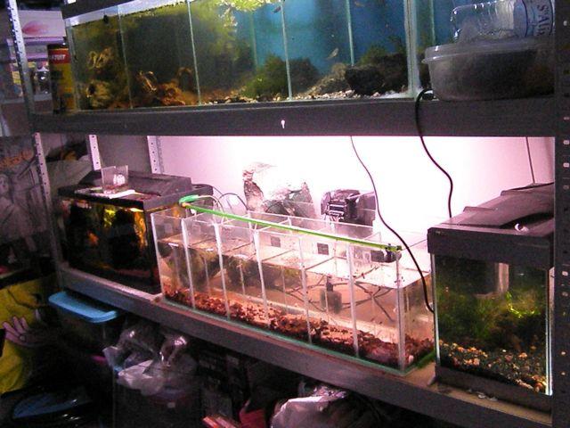 fishroom (fishappart) Derwins 15.278