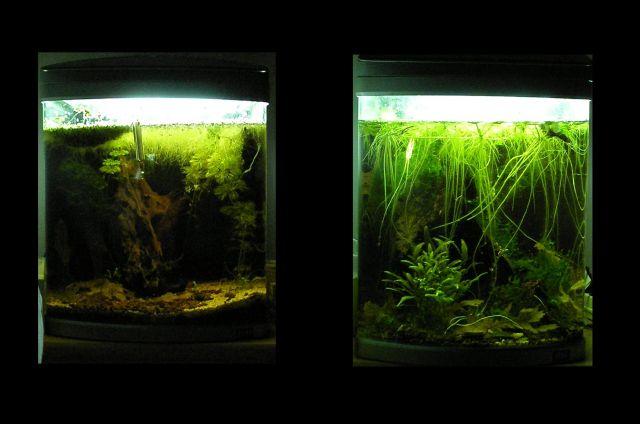 fishroom (fishappart) Derwins 15.279
