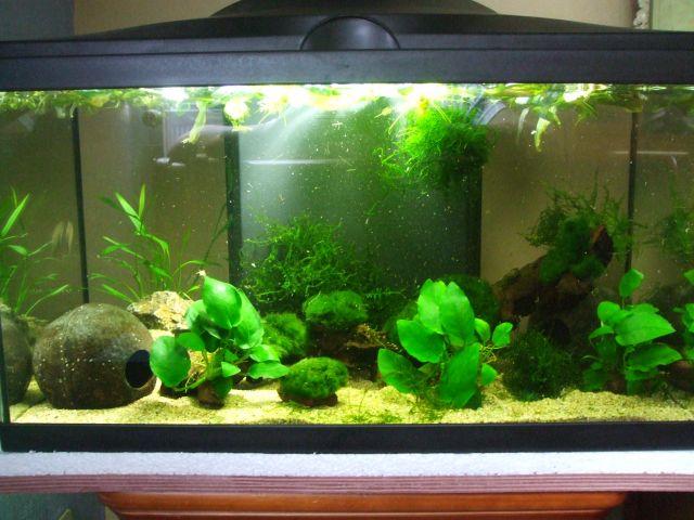D coration aquarium 60 litres for Vendeur aquarium