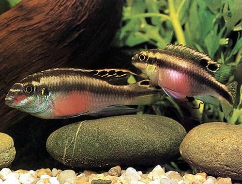 Afficher le sujet donne poissons pelmatos et for Donne poisson