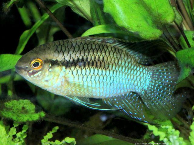 Afficher le sujet donne poissons pelmatos et for Donner des poissons