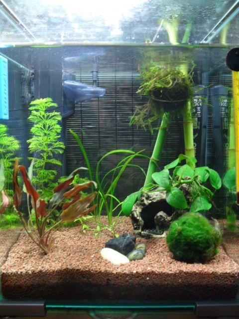 idée déco aquarium 20 l