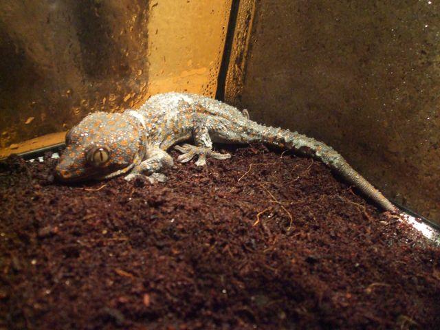 Mes reptiles et Insectes 16.10