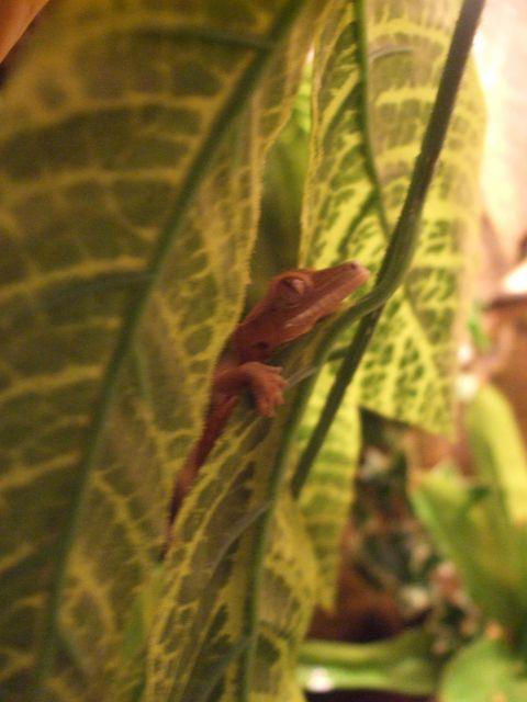 Mes reptiles et Insectes 16.13