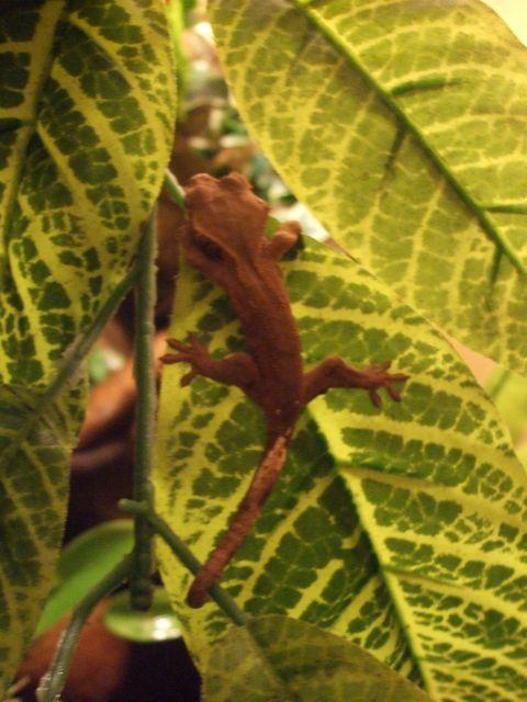 Mes reptiles et Insectes 16.14