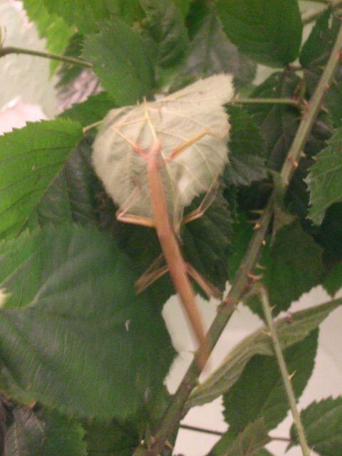 Mes reptiles et Insectes 16.15