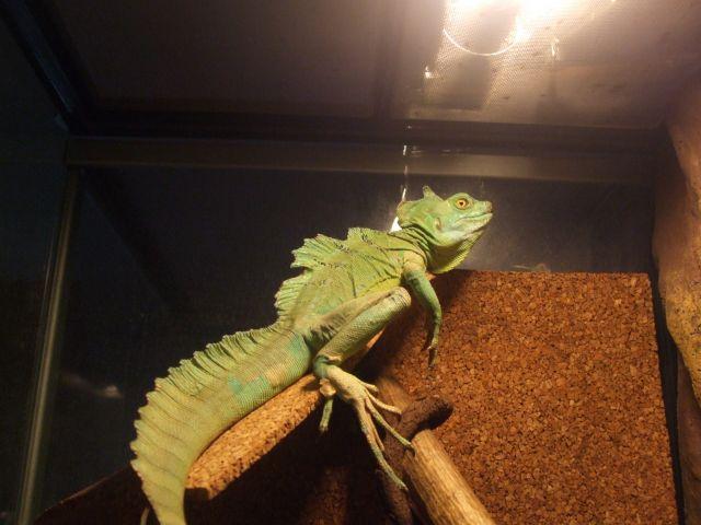 Mes reptiles et Insectes 14.136