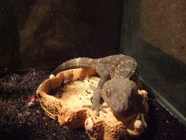 Mes reptiles et Insectes 16.102