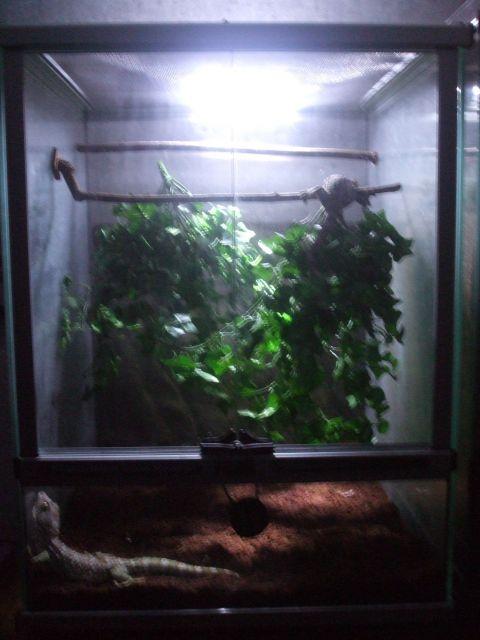 Mes reptiles et Insectes 01.68