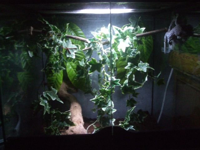 Mes reptiles et Insectes 01.69