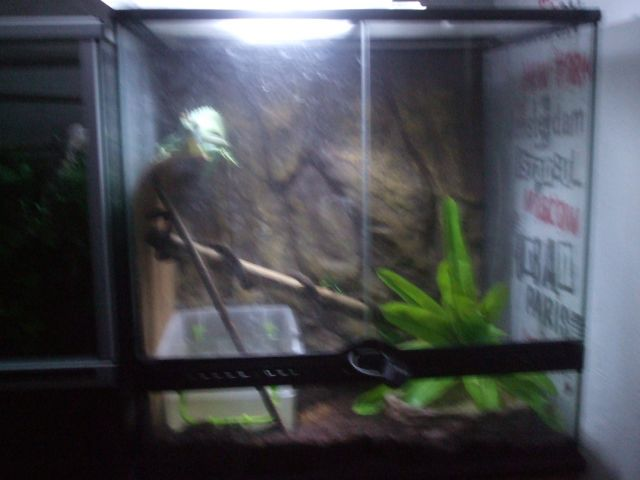 Mes reptiles et Insectes 01.70