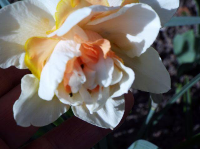 lorraine en fleur 2014 29.45