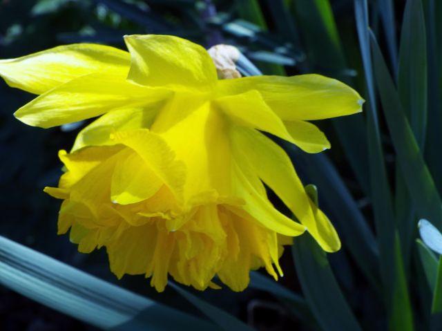 lorraine en fleur 2014 29.46