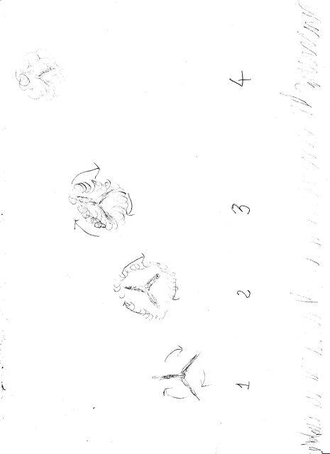 1975: le 15/07 à 21h30 - Aile volante en forme de boomerang -  Ovnis à St Sulpice de Royan - Charente-Maritime (dép.17) 12.18