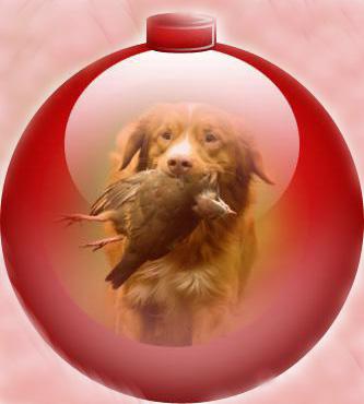 Concours photos de vos chiens, chats à l'occasion des fêtes de fin d'année 15.36