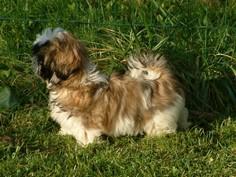 Nos chiens prennent la pose, statique exposition. - Page 2 Buqbfzeo